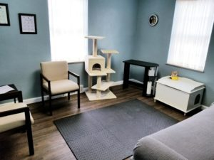 Low stress vet clinic, cat exam room